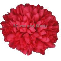 Hot Pink Mum Flower