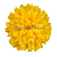 Yellow Mum Flower